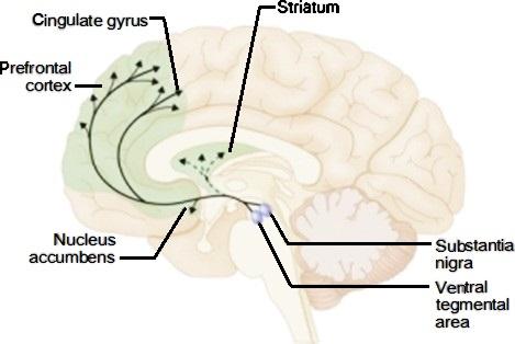 اثر پورنوگرافی بر مغز