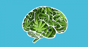 ماریجوانا- سایت تخصصی روانشناسی دکتر کامیار سنایی